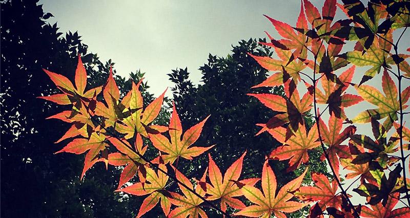 automne2016